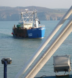 Scalloping trawler in Fishguard Harbour